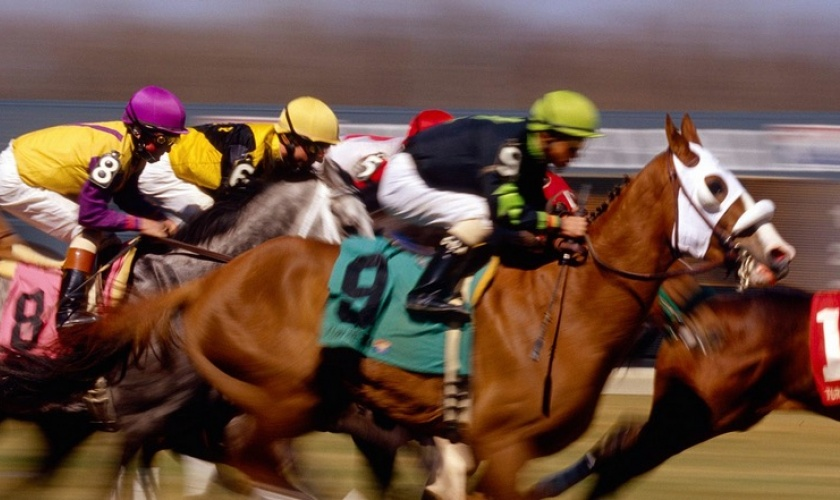 Online Horse Betting Guide
